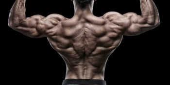 Muscle_Building_Exercises__Thick_Back_Blitz___Muscle___Fitness.jpg